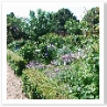 前の庭は ボックス・ヘッジで囲われた花壇。