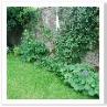 静かな佇まい。花は少しでいい。芝がきれいだから庭になってますね。