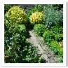 野菜も植物 ならば野菜で庭を造るというのがポタジェ。