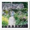 毎日観光客に覗かれ 写真を撮られている庭を維持しているのは誰でしょうか。