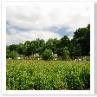 アーリントン・ロウの前の道から 湿地とその先の街道を望む。