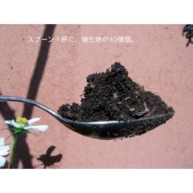 陰陽蝶 | [組圖+影片] 的最新詳盡資料** (必看!!) - www.go2tutor.com