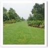 ミックス・ボダーの反対側に真っ直ぐ伸びる坂には芝生が。
