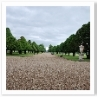 直径300mの半円形の庭。放射状に3筋のイチイの並木。