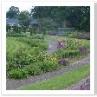 池の周りには ワイルドな花壇が。