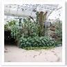 イングリッシュ・ガーデンのボーダーの伝統が感じられます。