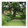 オールド・ガーデンは このヒマラヤスギの下をくぐって入ってくる。