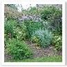 オールド・ガーデンの花壇。