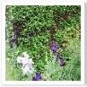 サークルの花壇