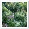 ノース・ボーダー。多彩な植物の配置なのでしょうね。