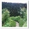 ブリッジ・ガーデンとの境の生垣