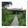 ローズ・ボーダーは長方形で 4周を高い生垣で囲んであります。バラの部屋。