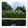 水が止まっている時。庭に静寂が訪れる。静寂をデザインしている噴水。