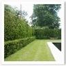 モダンなウォター・ガーデンの生垣も天端は直線で見えても面は曲面。