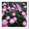 キフツゲート・コート・ガーデンには 花が一杯でした。