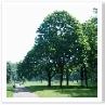 姿のいい 樹木ですね。