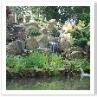 右手の木は100年前 日本から100年ものといわれた盆栽。計200年の木。