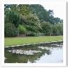 背後のボーダーにある勢いある植物と 芝、池の対比がいいですね。