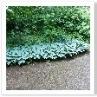 自然に足が向くように 緑が導いてくれます。