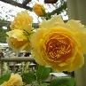 【国際バラ&ガーデニングショー2010】のお便り1