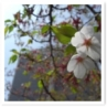 春の特別公開1