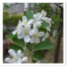 春の特別公開2