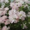 国際バラとガーデニングショウ2011