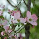 【保内公園植木祭り】のお便り