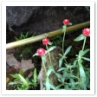 小ぶりで淑やかな赤い花は和庭園に映えますね。