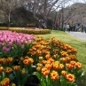 「世界一美しい桜とチューリップの庭園」と銘打たれたエリアの起点です。サクラが満開になれば、その名に恥じぬ美しさを顕してくれるかも。