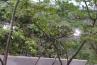忽然と人が消え去って、雨が降って水たまりが出来…という設定とのことで…ほんとに雨が降ってるんですよね。良く見ると、自動散水で使われるドリップチューブが枝に這わせてあります。