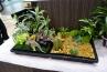 ミニチュア系でもこちらはフィギュアなどを配置した、漫盆栽的なもの。葉の細かなカラーリーフや多肉植物が多用されます。