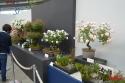国際バラとガーデニングショウ:バラ盆栽