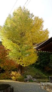 晩秋の湖北五山巡り その2 - 25 / / / / /