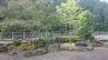 雑木を取り入れた和風庭園