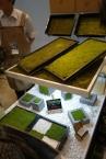 こちらはスナゴケマット。明邦技研のブース。耐候性が高く、無機基盤になじむスナゴケは屋上緑化によく採用されるようにもなってきました。
