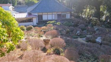 初春の遠州名園巡り10:気賀の長楽寺