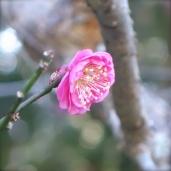 初春の遠州名園巡り13:気賀の長楽寺