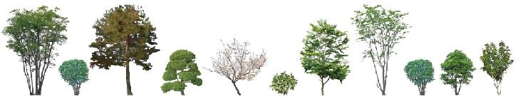 技能検定 造園2級・造園3級の出題樹木