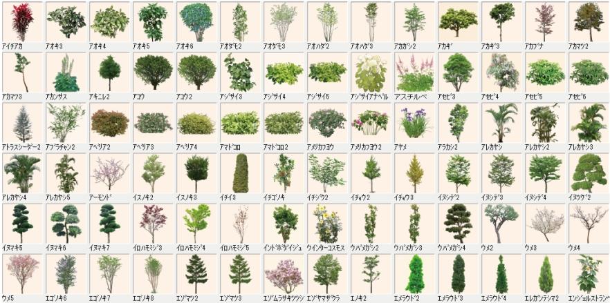 樹木コンテンツ