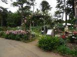 大きなアーチには、ふわふわとしたボリュームのあるバラがたくさん花をつけていました。