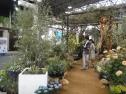アジサイやオリーブなぢお庭植物から観葉植物の販売