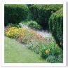 力強いトピアリーと 繊細な小さい花々。