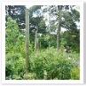仕立て用の木柱