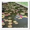 池は4m×12m程度の小さい池でした。