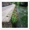 テムズ河に流れる。護岸の擁壁に花を植えたのは誰でしょうか。