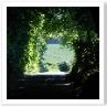 防風林のトンネル。