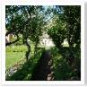 マナー・ホテルのバックヤードにある庭。りんごの並木。