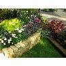 鮮やかなリーフと花の花壇