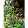 花やハーブと収穫した野菜たち